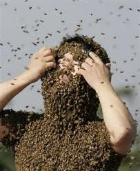 Covered in Bees