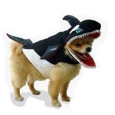 Dog in Orca Costume